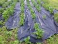 Gutta zahradní textilie Agrotex