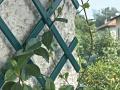 Gutta mříž na rostliny Treplas